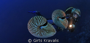 Chambered Nautilus by Girts Kravalis 